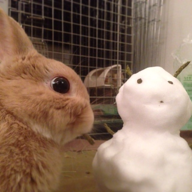 雪だるまを作ってもらったよ!